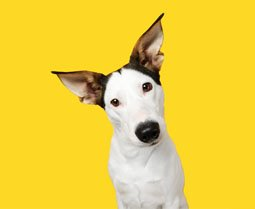 Album photo Animaux